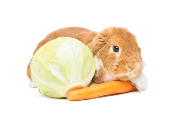 うさぎ,野菜