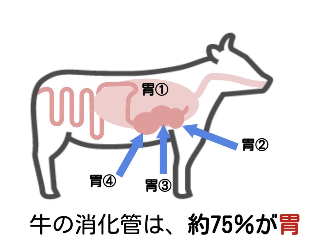 ウシの胃イラスト/ ウサギの栄養学(1)ウサギの消化管のしくみ~独自の結腸分離システムを使った生き残り戦略~