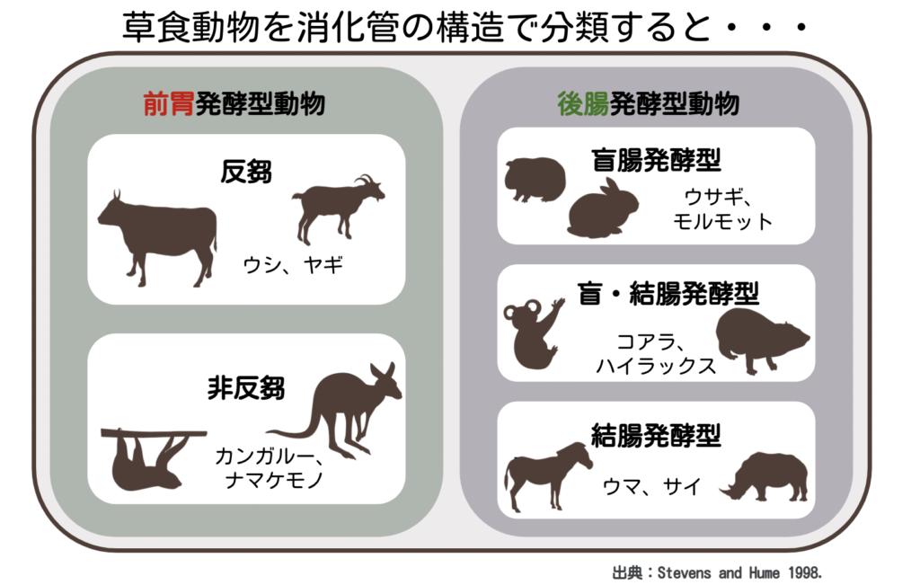 草食動物の消化管の違いによる分類/ ウサギの栄養学(1)ウサギの消化管のしくみ~独自の結腸分離システムを使った生き残り戦略~