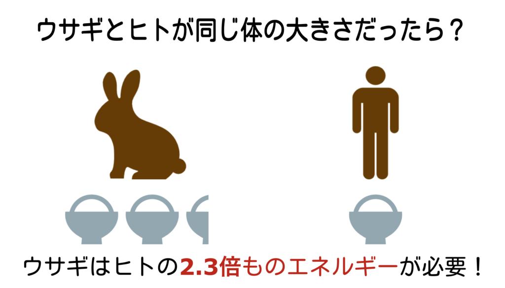 ウサギとヒトが同じ体の大きさだったら/ ウサギの栄養学(1)ウサギの消化管のしくみ~独自の結腸分離システムを使った生き残り戦略~