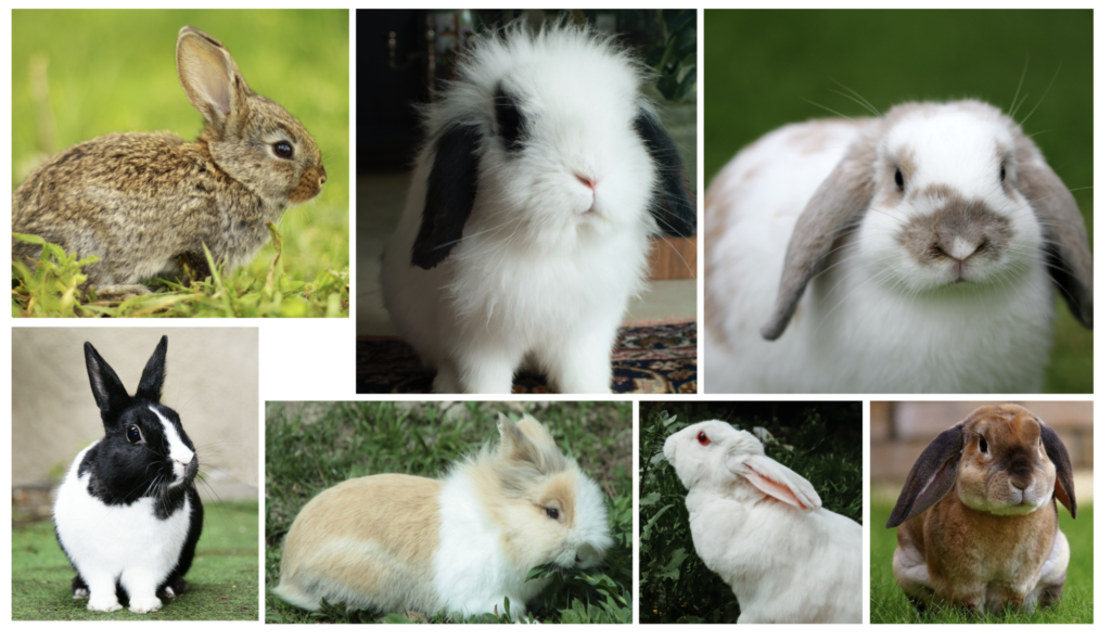 いろいろな種類のウサギ ウサギの栄養学(1)ウサギの消化管のしくみ~独自の結腸分離システムを使った生き残り戦略~