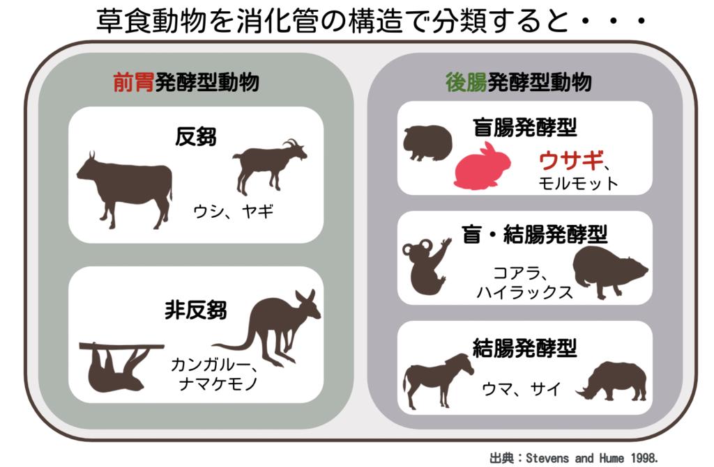 草食動物の消化管の違いによる分類ウサギ/ ウサギの栄養学(1)ウサギの消化管のしくみ~独自の結腸分離システムを使った生き残り戦略~