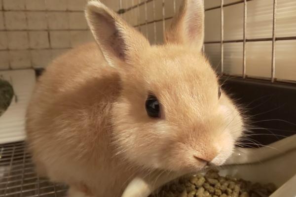 エサを食べるウサギ/ウサギの栄養学(6)どう守る?ウサギの「食の安全」