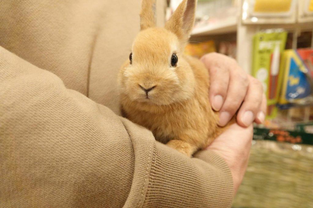 動物行動学者監修ウサギの「かじる」謎にせまる image12