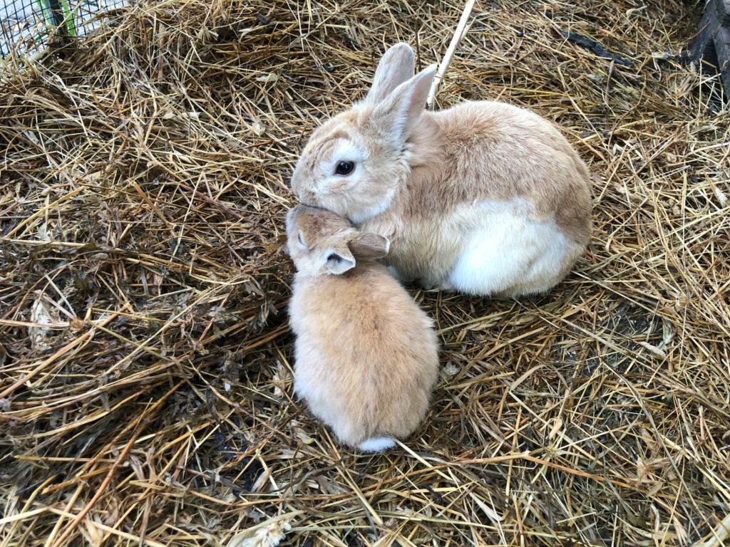 ウサギの親子/ウサギのマーキングの意味は?