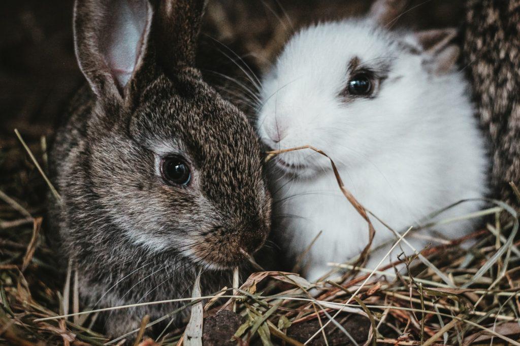 マーキングイメージ/ウサギのマーキングの意味は?