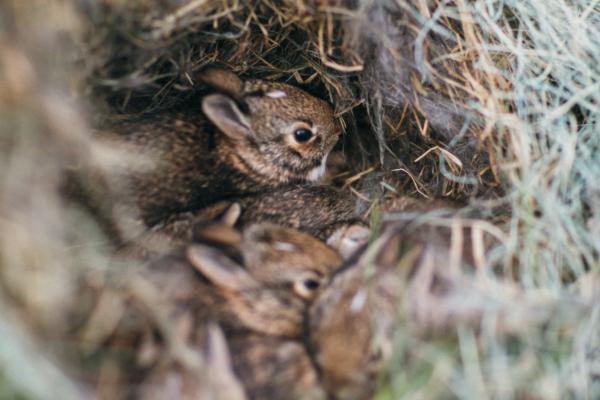 巣の中の子うさぎー動物行動学者監修 育児放棄じゃなかった!ウサギの子育ての秘密〜妊娠・出産から育児まで〜
