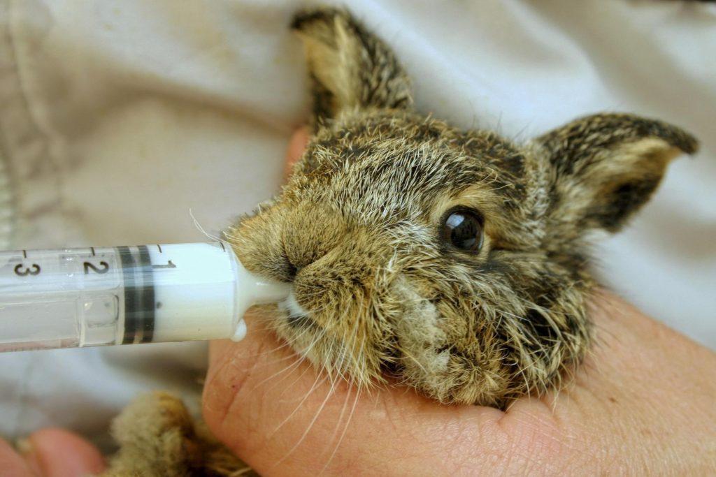 授乳ウサギー物行動学者監修 育児放棄じゃなかった!ウサギの子育ての秘密〜妊娠・出産から育児まで〜