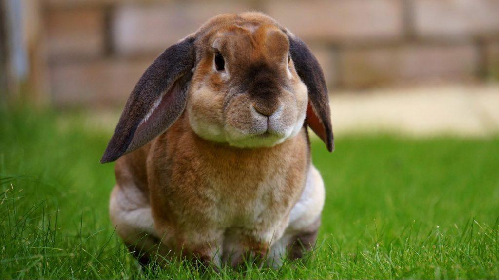 座り込むウサギ/ウサギのマーキングの意味は?