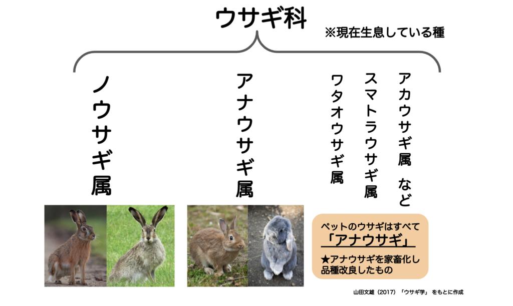 ウサギ科/ウサギの栄養学(2)フンを食べないと生きられない!食糞の重要性とは?