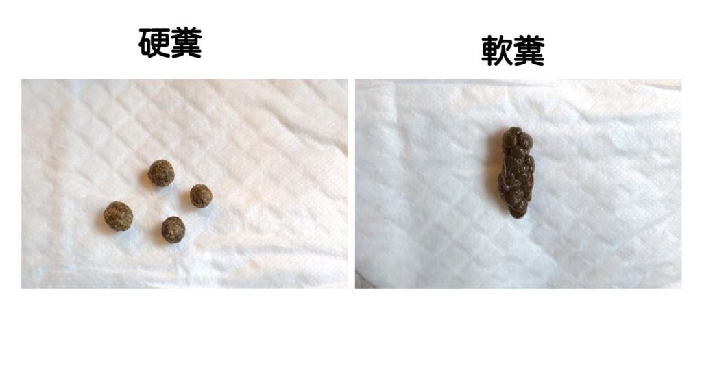 ウサギ硬糞と軟糞の比較/ウサギの栄養学(2)フンを食べないと生きられない!食糞の重要性とは?