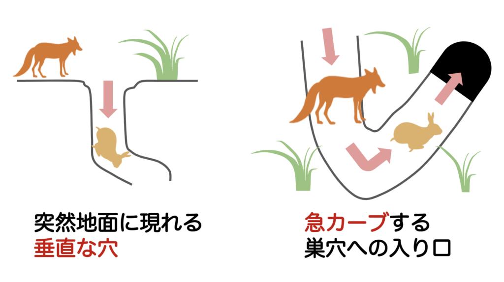 うさぎの巣穴の捕食者対策ー動物行動学者監修「逃げて隠れる」捕食者に打ち勝つウサギの知恵とは