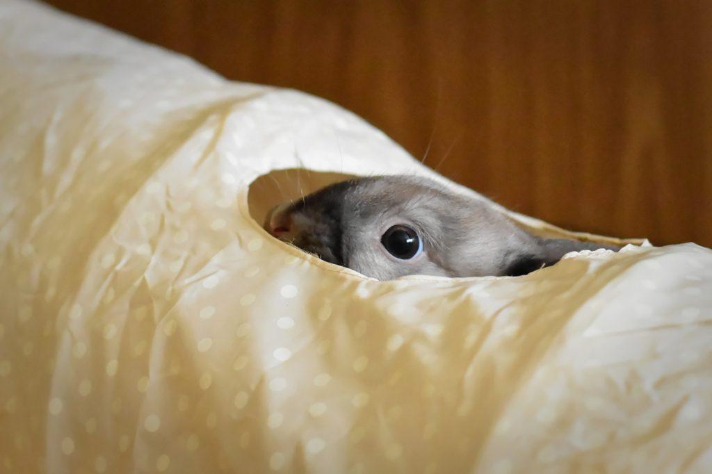 顔を出すうさぎー動物行動学者監修「逃げて隠れる」捕食者に打ち勝つウサギの知恵とは