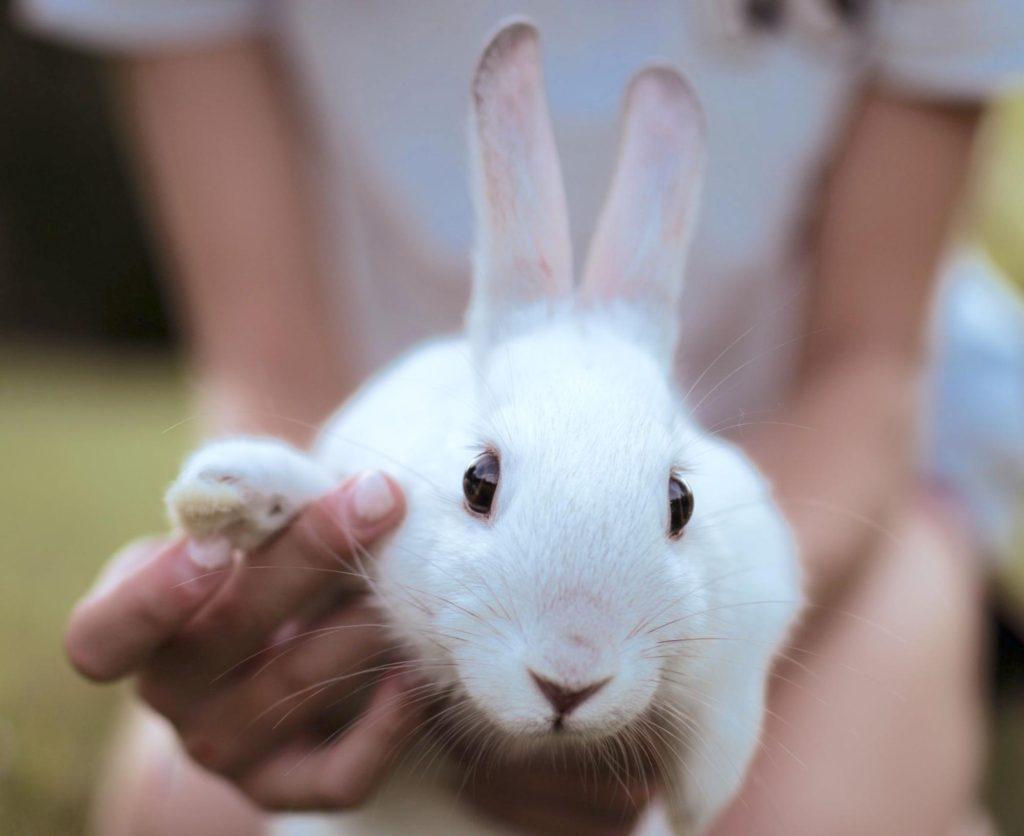 動物行動学者監修 「視覚・聴覚・嗅覚」ウサギウサギの目ーの警戒センサーの秘密を探る