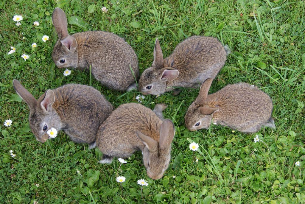 ウサギの群れー動物行動学者監修 ウサギの群れでの暮らし・社会のしくみを探る