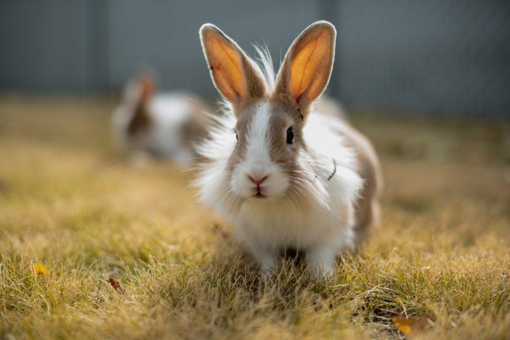 走るウサギー動物行動学者監修 ウサギの群れでの暮らし・社会のしくみを探る