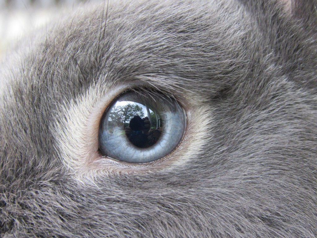 ウサギの目/動物行動学者監修 細切れがウサギ流?睡眠のひみつ