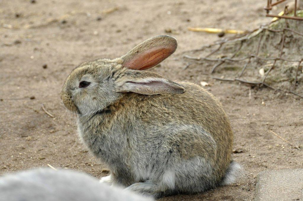 いびきイメージ/動物行動学者監修 細切れがウサギ流?睡眠のひみつ