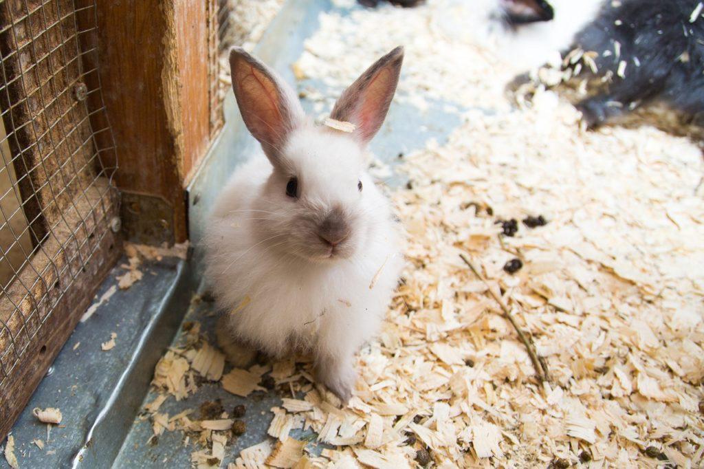 ウサギ小屋/動物行動学者監修 細切れがウサギ流?睡眠のひみつ