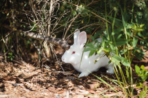 隠れるうさぎ/動物行動学者監修 ウサギの怖いものって何?怯えるウサギの行動・心