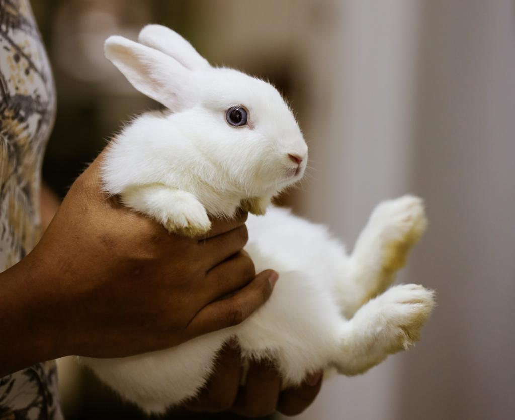 抱き上げられるウサギ/動物行動学者監修 ウサギの怖いものって何?怯えるウサギの行動・心