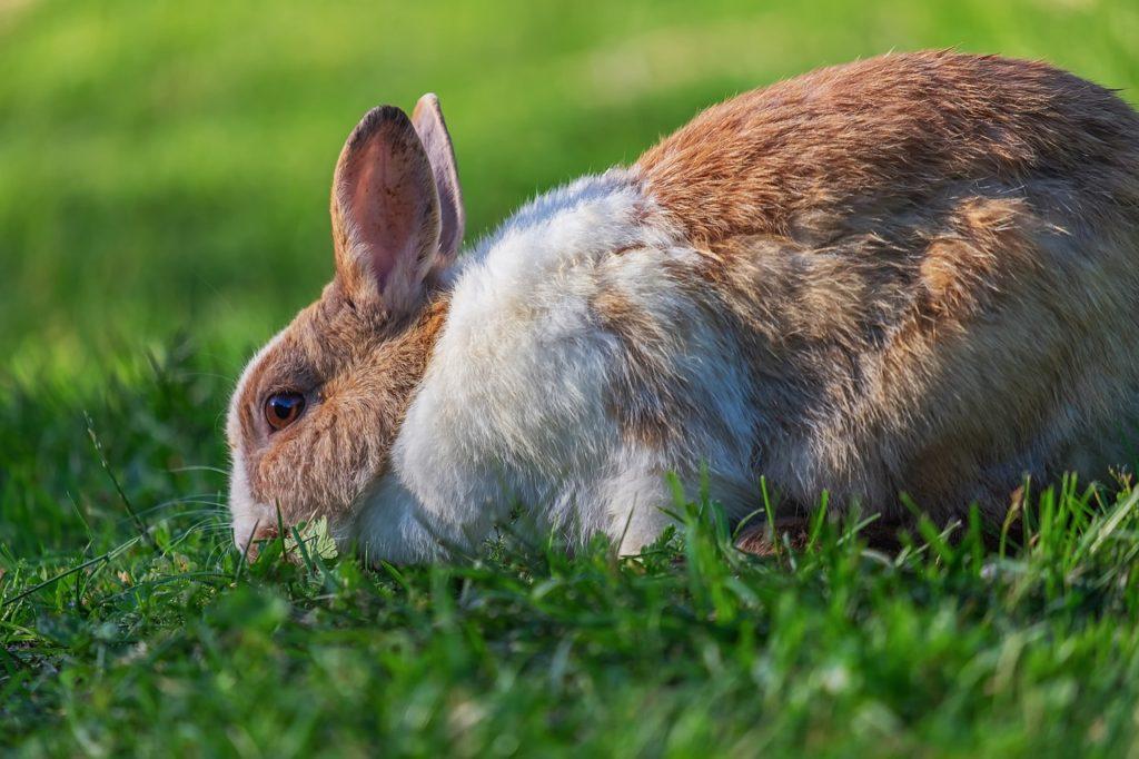 草を食べるうさぎ/動物行動学者監修 ウサギの怖いものって何?怯えるウサギの行動・心