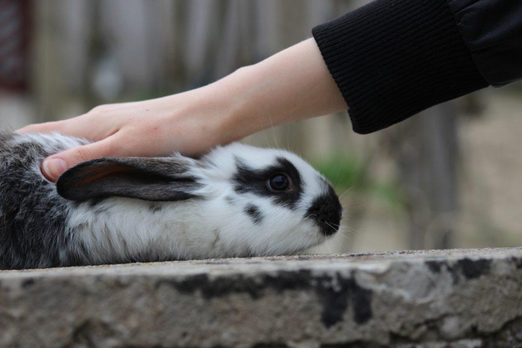 人とのふれあい/動物行動学者監修 ウサギの怖いものって何?怯えるウサギの行動・心